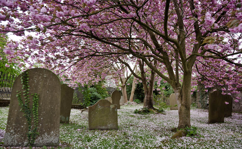 fotografia-naturaleza-cementerio